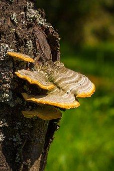 Wood, Tree Trunk, Mushrooms