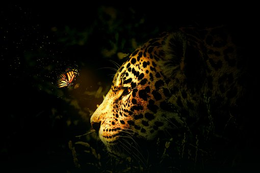 Tiger, Forest, Jungle, Nature, Green, Tree, Wild