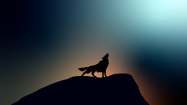 Animal, Wolves, Portrait, Cold, Moon, Dark, Grey, Wolf