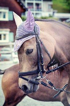 Horse, Pony, Horse Head, Riding School, Ride