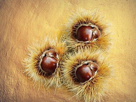 Fruits, Seeds, Fresh, Food, Natural, Chestnut, Golden