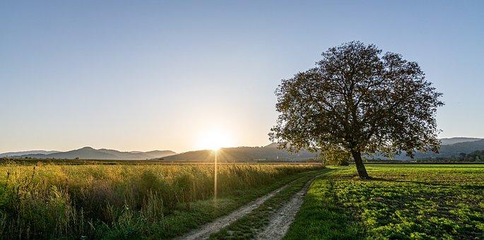 Sunrise, Sky, Landscape, Nature, Sun, Tree, Rest, Mood