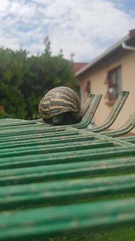 Snail, Yellow Snail, Striped Snail