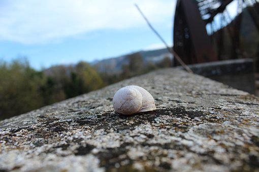 Snail, Shell, View