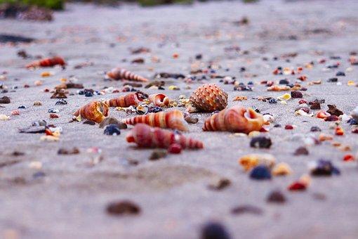Snails, Stone, Bangladesh