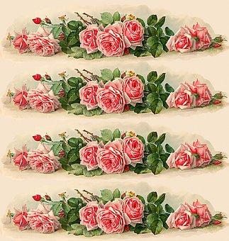 Flowers, Roses, Plants, Garden, Flora, Spring, Summer