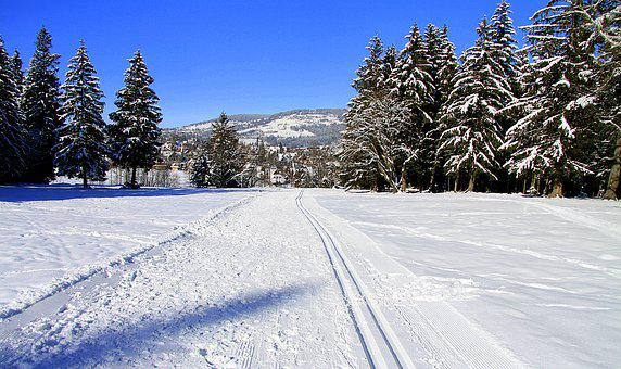Winter, Snow, Trail, Path, Road, Trees, Woods, Conifer