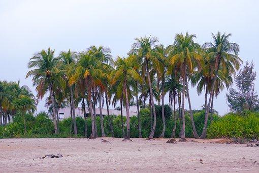 Palm Trees, Beach, Sand, Coconut Trees, Tropical