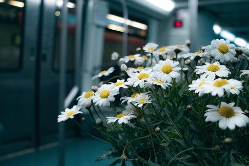 Flower, Train, Landscape, Lace, Wand, Nature, Orlando