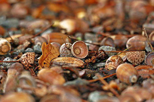 Forest Floor, Acorns, Autumn, Forest Fruits, Leaves