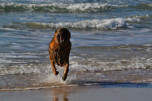 Dog, Sea, Pet, Water, Animal, Nature, Happy, Seashore