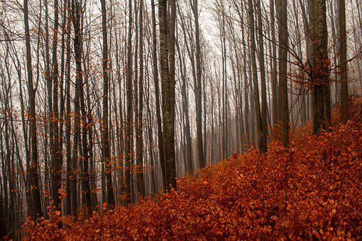 Autumn Forest, Autumn Leaves In Forest