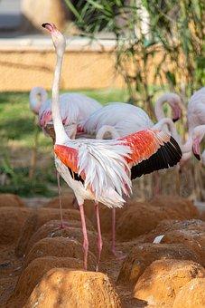 Bird, Flamingo, Beak, Plumage, Feathers, Water, Lake