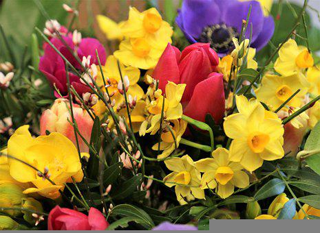 Flower, Blossom, Bloom, Bee Pollen, Pollen, Petals
