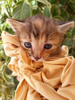 Cat, Kitten, Animal, Cosy