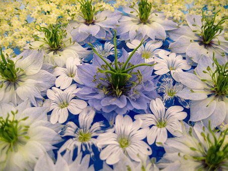 Flower Arrangement, Flowers, Water, Stems, Anthers