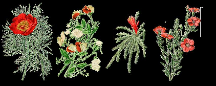 Vintage, Flowers, Peony, Pea, Rat Tail Cactus, Cactus