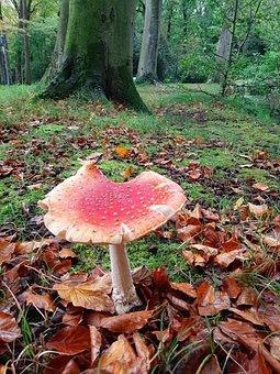 Mushrooms, Fungus, Fungi, Forest, Spore, Nature