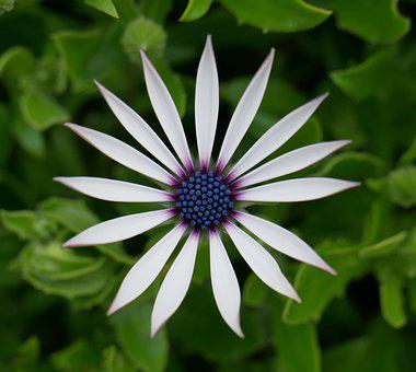 Flower, Petals, Stem, Leaves, Foliage, Garden