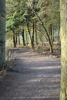 Forest, Green Bark, Nature, Green, Trees, Landscape