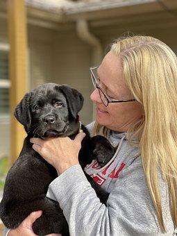 Woman, Puppy, Pet, Friendship, Dog, Female, Happy, Love
