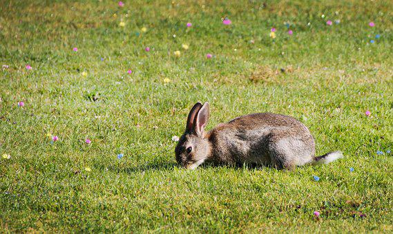 Bunny, Hare, Rabbit, Meadow, Grass, Easter, Cute