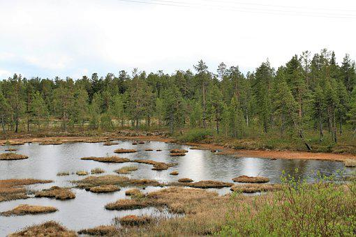 Swamp, Lapland, Trees, Forest, Water, Habitat, Sky