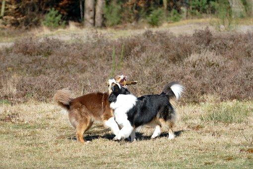 Dog, Pet, Mammal, Play, Branch, Heide, Fun, Brown