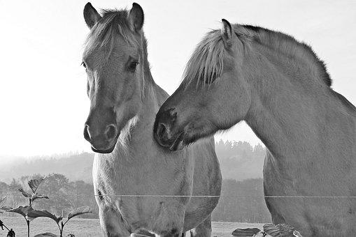 Horses, Mold, Horse Head, Pasture, Coupling, Mammal
