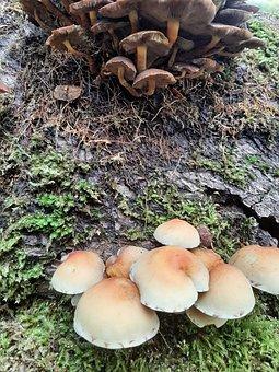 Mushrooms, Fungi, Fungus, Trees, Forest, Mushroom