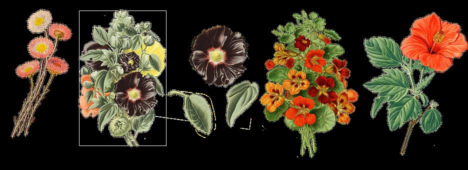 Vintage, Flowers, Paper Daisies, Mallow, Nasturtium