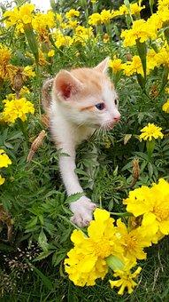 Cat, Flower, Nature