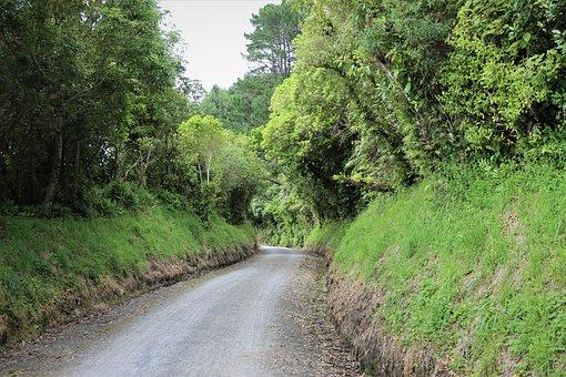 Hiking Trail, Off The Beaten Track, Green, Lush