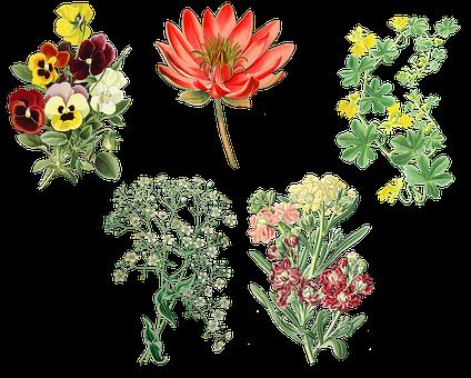Vintage, Garden Plants, Pansy, Water Lily, Gypsophila