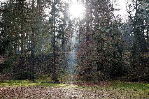 Trees, Park, Sunlight, Woods, Woodlands, Forest