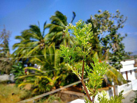 Plant, Nature, Flower, Forest, Flora, Bloom, Blossom
