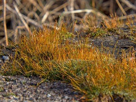 Moss, Sticks, Plant, Nature, Rusty, Yellow, Red, Green