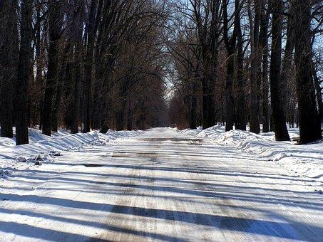 Road, Winter, Snow, Landscape, Nature, Forest, Cold