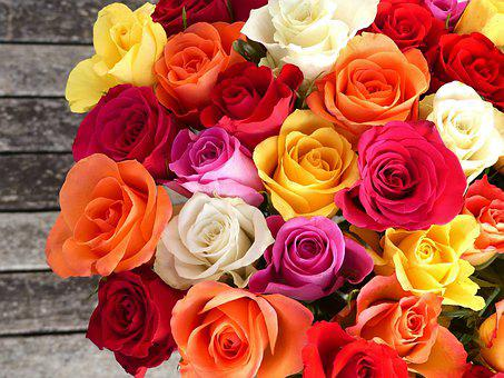 Rose, Bouquet Of Roses, Colorful, Color, Bouquet