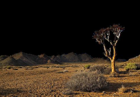 Desert, Tree, Land, Mountains, Sand, Badlands, Arid