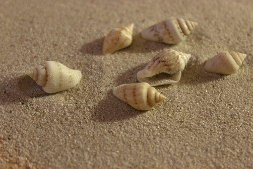 Shell, Sand, Beach, Coast, Shore, Vacation, Marine