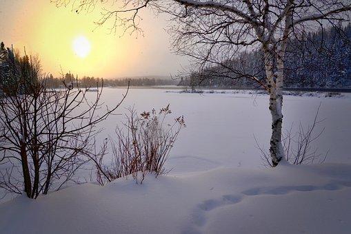 Snow, Sunset, Trees, Field, Snow Field, Snow Landscape