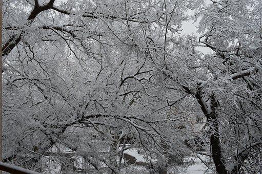 Winter, Cold, Snow, Nature, Landscape