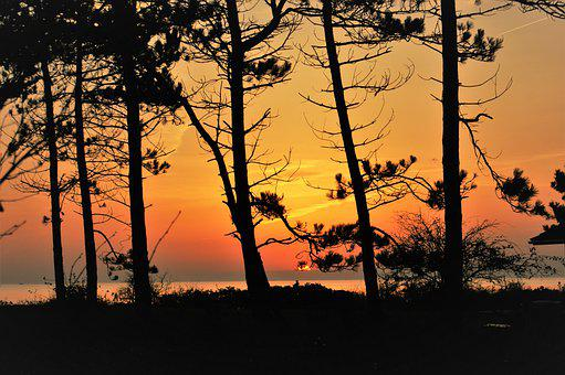 Forest, Sunset, Evening, Sea, Dusk, Sun, Water, Sky