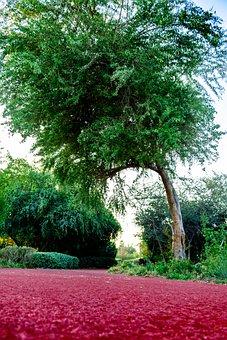 Green, Road, Tree