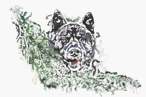 Akita, Dog, Photo Art, Pet, Animal, Canine, Cute
