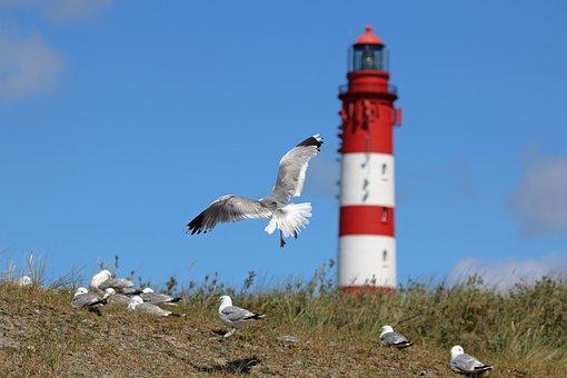 Amrum, Gulls, Birds, Coast, Flying, Gull, Animals
