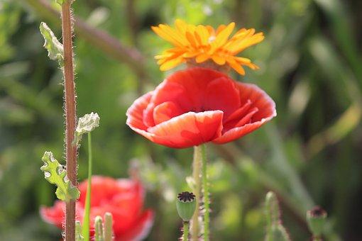 Flower, Petals, Buds, Stem, Bloom, Flora, Spring