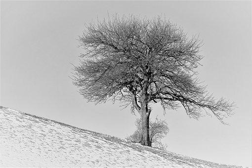 Winter, Cold, Snow, Tree, Aesthetic, Branches, S W
