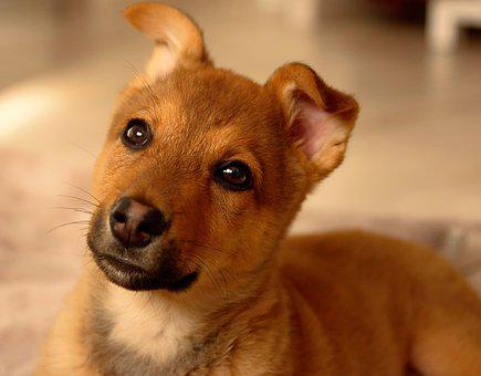 Dog, Puppy, Cute, Portrait, Doggy, Domesticated, Funny